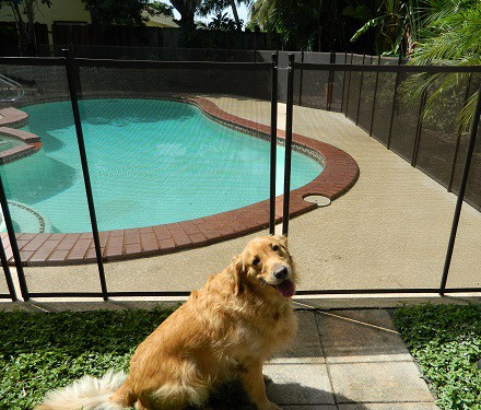 pet fence installations in Dallas, Forth Worth and Arlington, TX